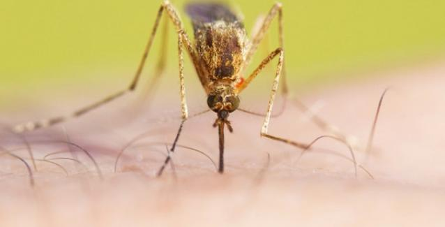 Θερίζει ο ιός του Δυτικού Νείλου: Δύο ακόμα θύματα. Οι επικίνδυνες περιοχές